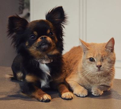 Hondentrimmer in Knokke-Heist - trimmen van katten, honden en knaagdieren.